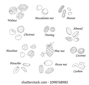 Vector set of black and white nuts. Collection of  isolated monochrome hazel nut, walnut, pistachio, almond, coconut, pecan, pine nut, macadamia, cashew. Food illustration in cartoon or doodle style