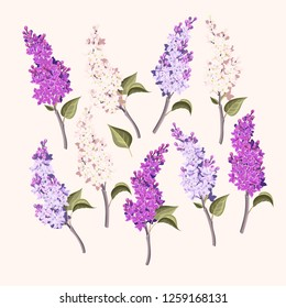 Vector set of branches of purple and white lilac