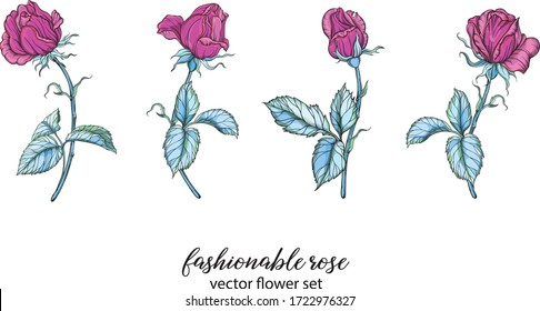 vector set with bright rose colors. Rose is pink.