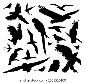 Vector set bundle of different black wild birds silhouette isolated on white background
