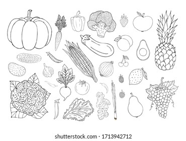 Vector set bundle of hand drawn doodle sketch vegetables fruit and berries isolated on white background