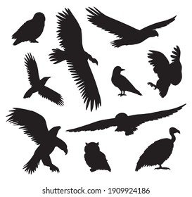 Vector set bundle of hand drawn wild predator bird silhouette isolated on white background