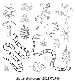 Vector set bundle of hand drawn doodle sketch forest animal rodent reptiles and insects isolated on white background