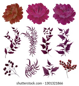 Vector set of Burgundy peonies, leaves, twigs, berries. All elements on white background.