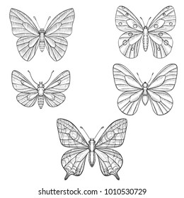 vector set of butterflies, hand drawn illustration, imitation of engrave