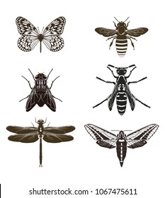 Vector set of butterfly silhouettes, fly, bee, wasp, dragonfly and moth isolated on white background. Insects.
