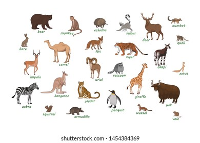 Vector set of cartoon animals isolated on a white background. Armadillo, bear, camel, deer, echidna