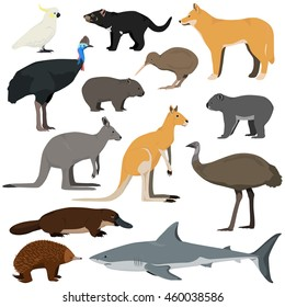 Vector set of cartoon australian animals. Red kangaroo, gray kangaroo, platypus, dingo, white shark, koala, tasmanian devil, emu,echidna, cassowary, kiwi, cockatoo parrot, wombat.