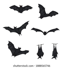 Vector Set of Cartoon Black Bats with Red Eyes. Horror Creatures Collection.