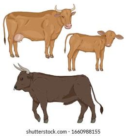 Vector Set of Cartoon Cattle. Farm Animals Illustration. Calf, Cow and Bull