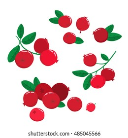 Vector set cartoon cranberries with green leaves isolated on a white background. Bright berries branch.