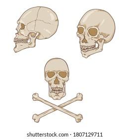 Vector Set of Cartoon Human Skull Illustrations