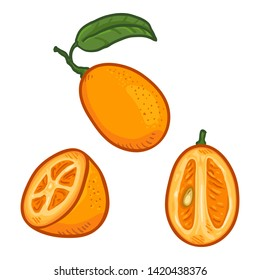 Vector Set of Cartoon Kumquat Fruits. Whole, Peeled and Sliced