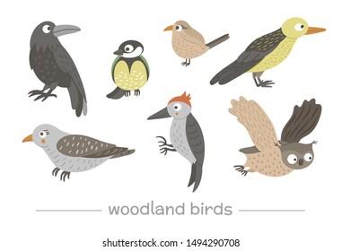 Vector set of cartoon style hand drawn flat funny cuckoos, woodpeckers, owls, raven, wren. Cute illustration of woodland birds for children's design