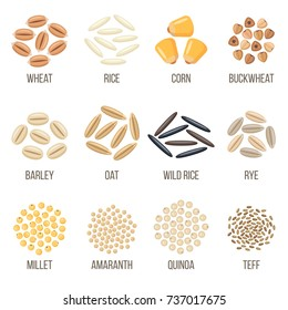 Vector set of cereal grains named. Flat style.