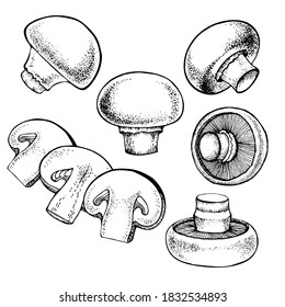 Vector set of champignon mushrooms, black and white graphics drawn in vintage style, engraving, gourmet cuisine, vegetarian, autumn mushrooms isolated on a white background for print, cookbook