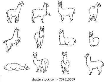 Vector set of characters. Illustration of south America cute lama. Isolated outline cartoon baby llama. Hand drawn Peru animal guanaco, alpaca, vicuna. Drawing for print, fabric, textile etc