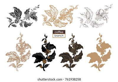 Vector set of coffee tree branches with flower, leaves and beans. Botanical drawing, sketch. Line art design. Realistic nature style. Organic food. Big collection. Illustration on white background