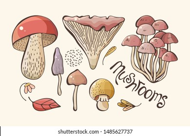 Vector set of colored forest mushrooms. Hand draws.  Inscription. Assortment of mushrooms, white mushroom, honey mushrooms, chanterelles, boletus sketch food pattern isolated on background.