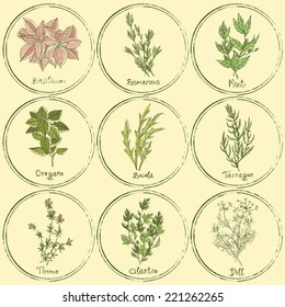 Vector set of colored herbs. Stamp colored herbs set. Vector illustration