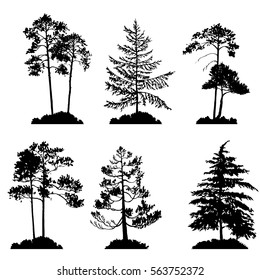 vector set of conifer trees silhouettes, hand drawn isolated natural elements
