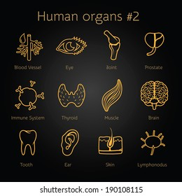 Vector set of contour icons of human organs and systems for infographic
