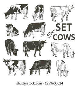 vector set of cows in graphic vintage style, hand drawing vector image.
