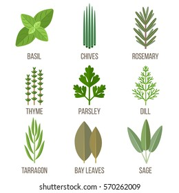 Vector set of culinary herbs illustrations. Flat style.