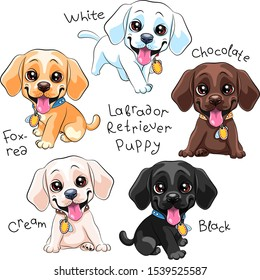 Vektorillustration-Set von süßem kleinen Welpe Labrador Retriever Hund mit Primärfarbsorten, Weiß, Schwarz, Schokolade, Gelbe Creme und Fuchsrot