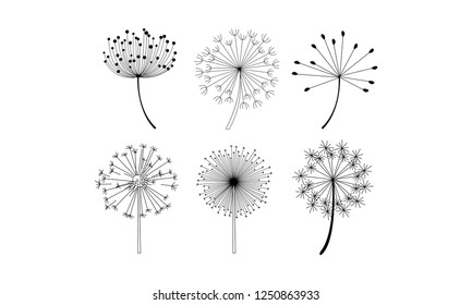 Vector set of dandelion flowers with fluffy seeds. Natural decorative elements in linear style
