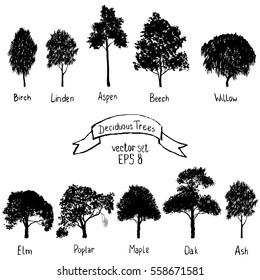 vector set of deciduous trees, hand drawn isolated natural elements, black silhouettes