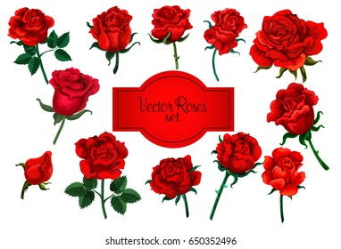 Vector set of decorative elements of roses. Ideal for design, cards, invitations, wedding invitations. Vector design.
