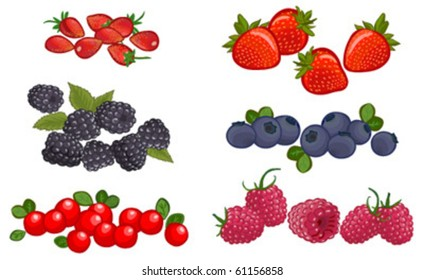 vector set of delicious ripe berry isolated on white