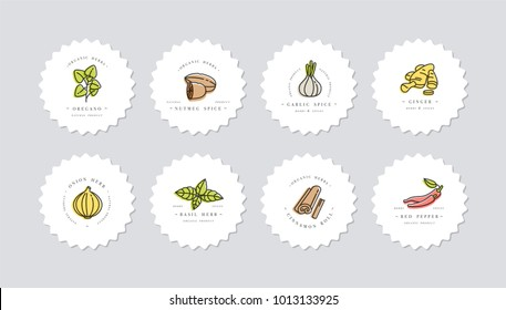 Vector set design colorful templates logo and emblems - herbs and spices. Different spices icon. Logos in trendy linear style isolated on white background