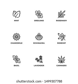 Vector set of design elements, logo design template, icons and badges for nature herbs. Line icon set, editable stroke.
