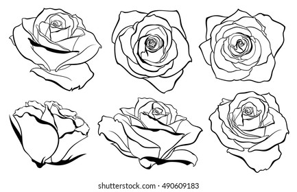 Vector set of detailed, isolated outline Rose bud sketches in black color. Vector illustration for design on white background.