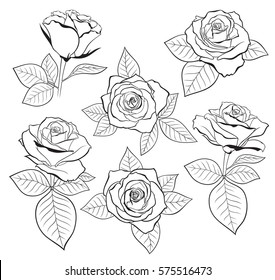 Vector set of detailed, isolated outline Rose bud sketches with leaves in black color. Vector illustration for design on white background.