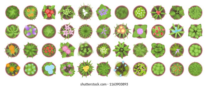 Vector set. Different flowers and plants in pots. Top view. Flowerbeds. View from above.