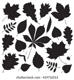 Vector set of different isolated tree leaf silhouettes on white background.
