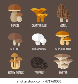 Vector set of different kinds of edible mushrooms. Flat style.