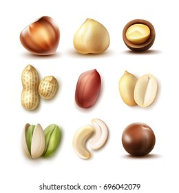 Vector set of different nuts: whole and half hazelnut, macadamia, pistachio, peanuts, cashew top, side view isolated on white background