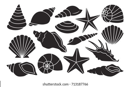 Vector Set Of Different Shells Isolated On White Background