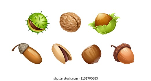 vector set of different types of nut fruits