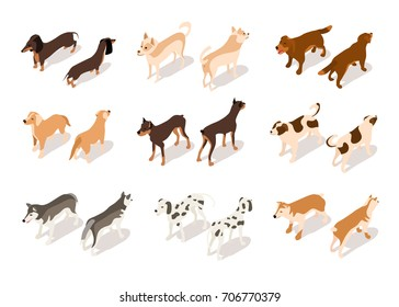 Vector set of dog isometric icons isolated on white background. Standing dog in different angles