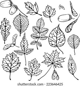 vector set of doodle leaves and seeds,isolated floral elements, hand drawn illustration