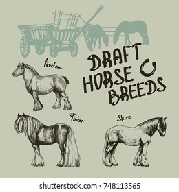 vector set draft horse