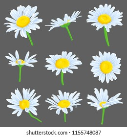 vector set of drawing daisy flowers, chamomiles, floral elements, hand drawn botanical illustration