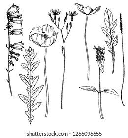 vector set of drawing flowers and plants, floral elements, hand drawn botanical illustration