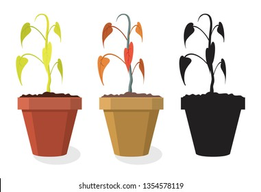 vector set of dying home plants isolated on white background. dry soil makes pot plant to wilt and become dead. symbols of dying flower