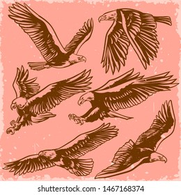Vector set of eagles flying and attacking in retro vintage style